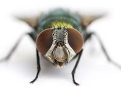 Insectocutores