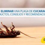Cómo eliminar una plaga de cucarachas: Productos, consejos y recomendaciones