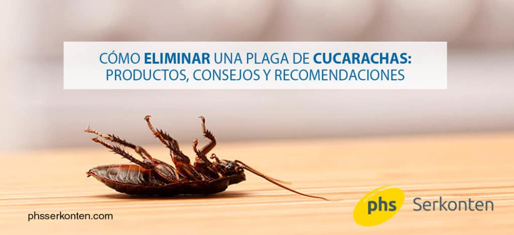 c mo debes eliminar una plaga de cucarachas que remedios