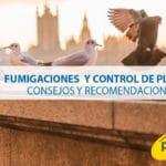 Fumigaciones y control de plagas: consejos y recomendaciones