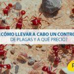 control de plagas precio